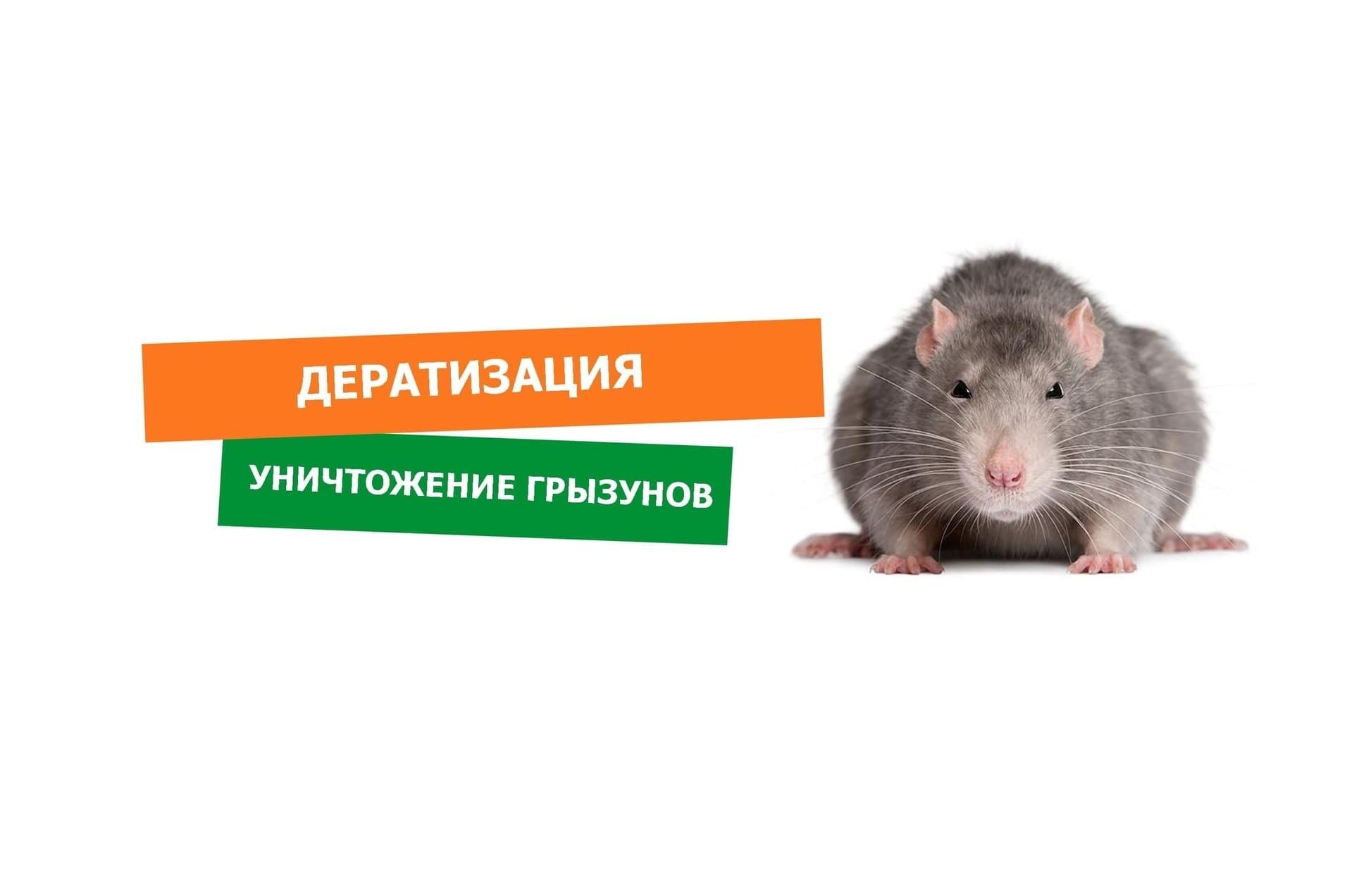 Дератизации в Краснодаре и крае