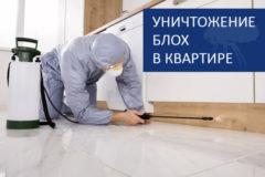 Уничтожение блох в Краснодаре и крае